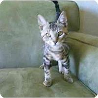 Adopt A Pet :: Jeffery - San Ramon, CA