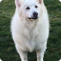 Adopt A Pet :: JoJo - Arvada, CO