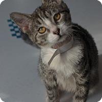 Adopt A Pet :: Albie - Brooklyn, NY