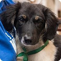 Adopt A Pet :: Memphis - Minneapolis, MN