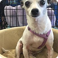Adopt A Pet :: Gertie - Orlando, FL