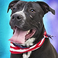 Adopt A Pet :: Shadow - Cincinnati, OH