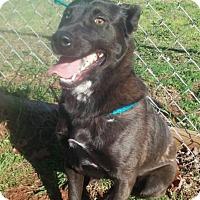 Adopt A Pet :: Sylvie - Lebanon, ME
