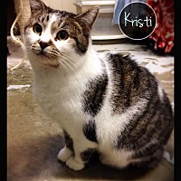 Adopt A Pet :: Kristi - Hartford City, IN