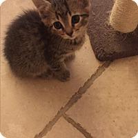 Adopt A Pet :: Thanos - Sterling Hgts, MI