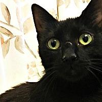 Adopt A Pet :: Penelope - Durham, NC