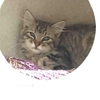 Adopt A Pet :: BENI - Fort Collins, CO