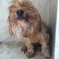 Adopt A Pet :: Jose - Kirby, TX