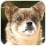 Photo 1 - Pomeranian/Pug Mix Dog for adoption in Vista, California - Lady