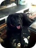 Labrador Retriever Mix Dog for adoption in Okotoks, Alberta - Jasmine