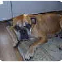 Adopt A Pet :: Juno - Albany, GA