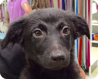 Dachshund/Terrier (Unknown Type, Medium) Mix Puppy for adoption in Pompton Lakes, New Jersey - Jay