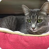 Adopt A Pet :: Isabella - Newport Beach, CA