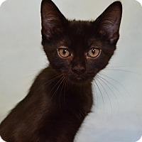 Adopt A Pet :: Amethyst - Larned, KS