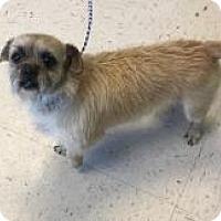 Adopt A Pet :: Biscuit - Shawnee Mission, KS