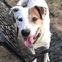 Adopt A Pet :: Spot - Sagaponack, NY