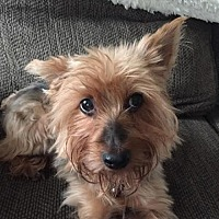 Adopt A Pet :: Millie/CP - Columbia, TN