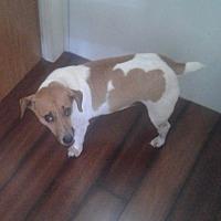 Adopt A Pet :: Emmet in Melbourne, FL - Austin, TX
