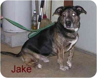 Labrador Retriever Mix Dog for adoption in Bloomsburg, Pennsylvania - Jake