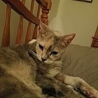 Adopt A Pet :: Sazon - Vineland, NJ