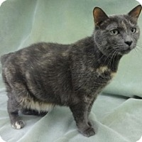 Adopt A Pet :: Katie - Olive Branch, MS