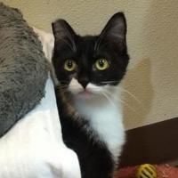Adopt A Pet :: Ella - Redmond, OR