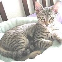 Adopt A Pet :: BorisR - North Highlands, CA