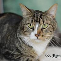 Adopt A Pet :: Mr. Jiggles - Spring, TX