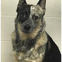 Adopt A Pet :: Boomer - Butler, KY