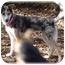 Photo 2 - Catahoula Leopard Dog/Collie Mix Dog for adoption in Wyoming, Minnesota - Selena