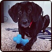 Adopt A Pet :: Lily - Marietta, GA