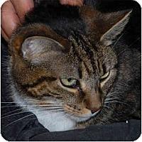 Adopt A Pet :: Laka - Warminster, PA