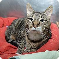 Adopt A Pet :: Calliope - New York, NY