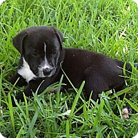 Adopt A Pet :: Blackjack - Harrah, OK