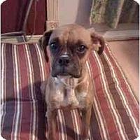 Adopt A Pet :: Nola - Brunswick, GA