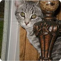 Adopt A Pet :: Baby Jack - Morris, PA