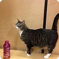 Adopt A Pet :: Maxwell - Monroe, GA