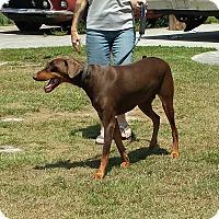Adopt A Pet :: COOPER - Wilmington, NC