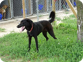 Retriever (Unknown Type) Mix Dog for adoption in Delaware, Ohio - Gizelle