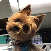 Adopt A Pet :: Jesse - Omaha, NE