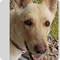 Adopt A Pet :: Joanie Balonie - East Hartland, CT