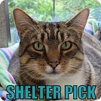 Adopt A Pet :: Sam - Eugene, OR