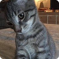Adopt A Pet :: Spanky - Hazlet, NJ