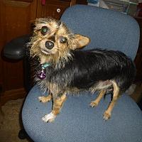 Adopt A Pet :: Neeko-pending - Glastonbury, CT