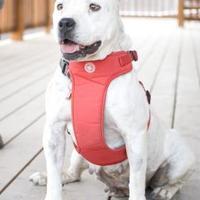 Adopt A Pet :: Addie - Fresno, CA