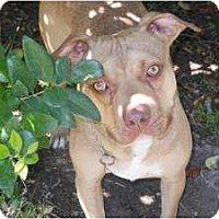 Adopt A Pet :: Hudson - Kingwood, TX