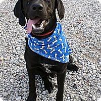 Adopt A Pet :: Flash - Hutchinson, KS