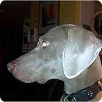 Adopt A Pet :: Cosmo  **ADOPTED** - Eustis, FL