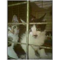 Adopt A Pet :: Caleb - Owasso, OK