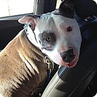 Adopt A Pet :: Dahlia - Owasso, OK